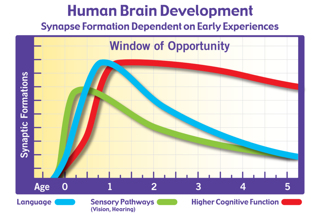 Milestone 3 the science of early learning the blue part of the graph shows the number of new synapses related to language development notice that this peaks just before 11 months of age ccuart Choice Image