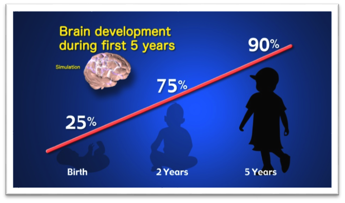 Brain development during the first 5 years: 75% of the mass of the brain is formed by around age 2 and 90% by age 5.